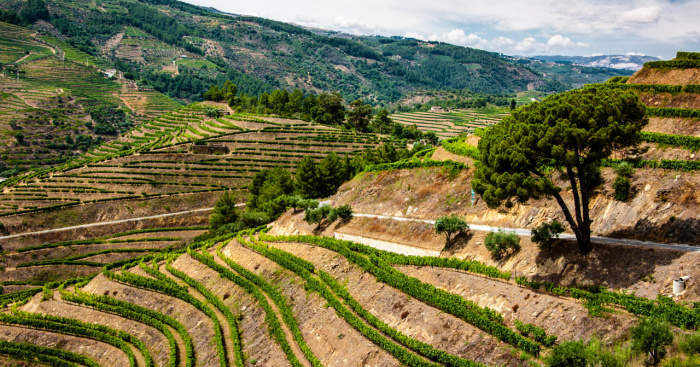 6 vineyards in the Douro Valley you can't miss — idealista
