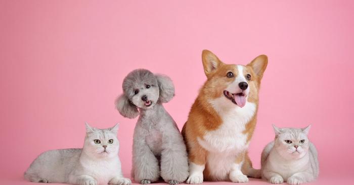 Haustiere In Portugal Vorschriften Für Hunde Und Katzen In