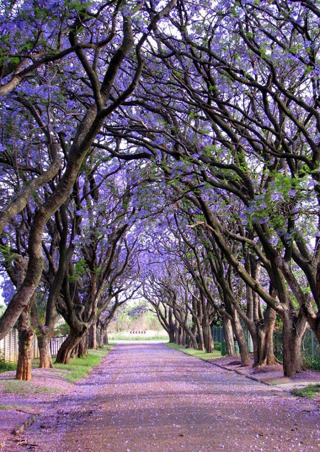 Rua em Cullinam, África do Su