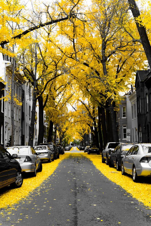Rua em Washington, EUA