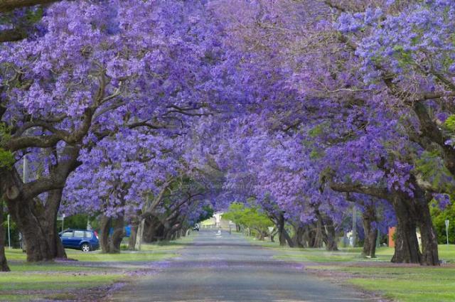 Rua em Grafton, Austrália