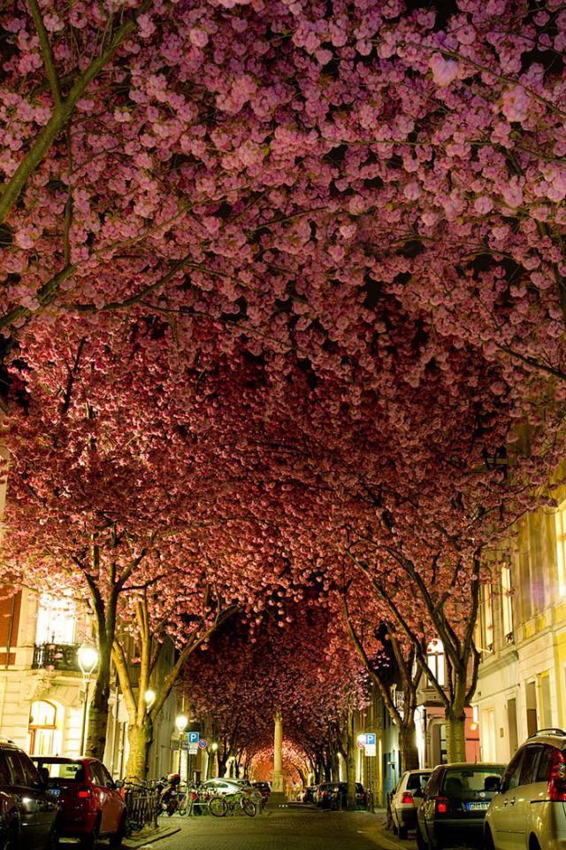 Rua em Bona, Alemanha