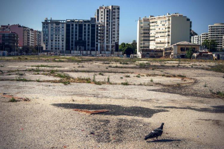 Preço base da hasta pública dos terrenos foi fixado em 137,7 milhões (Foto: Público).