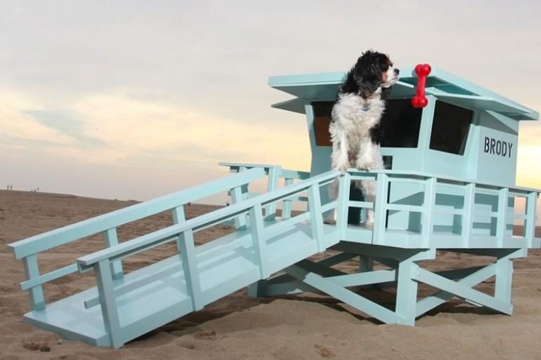 """Uma """"casa"""" para os cães que são salva-vidas"""
