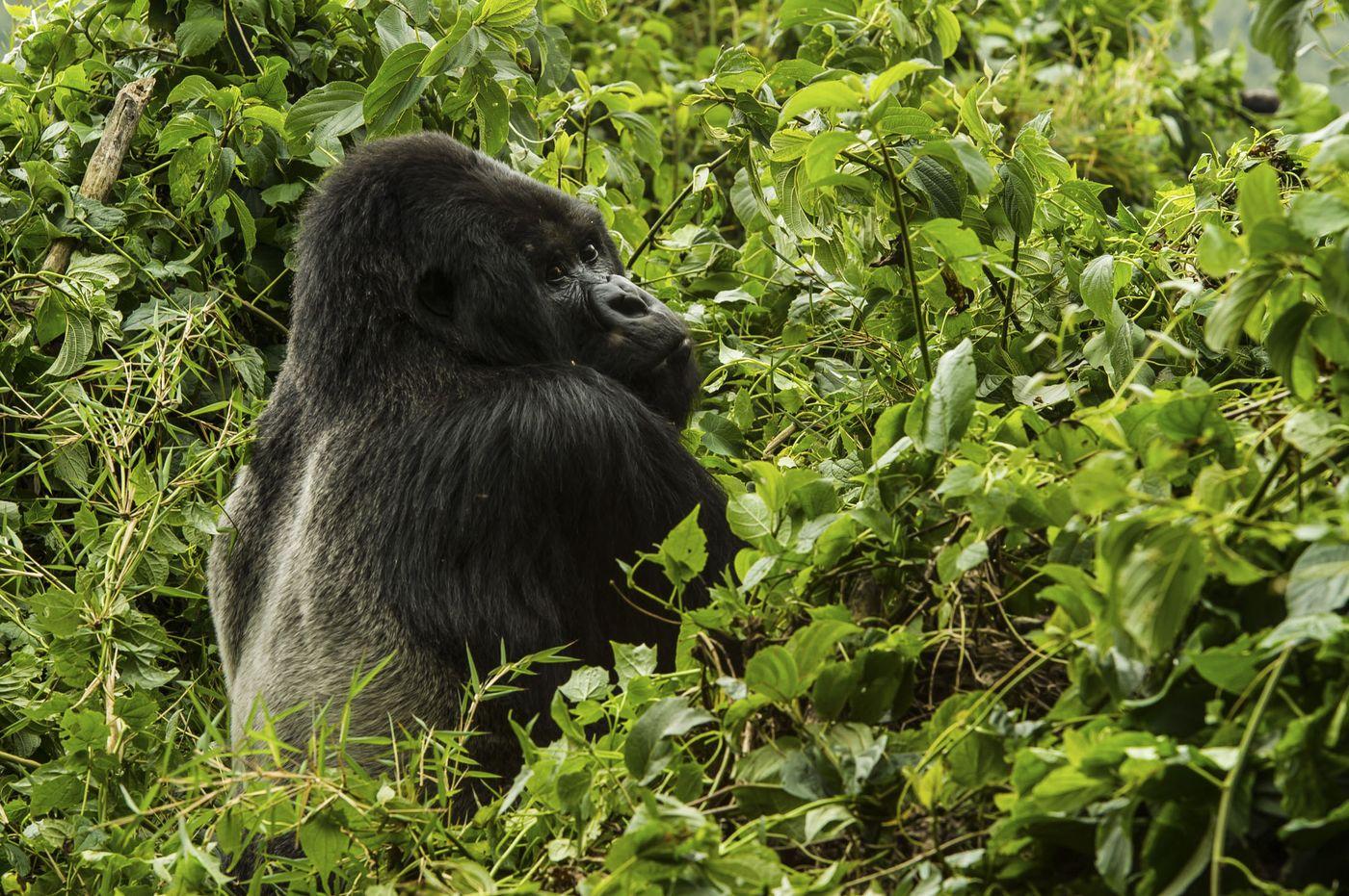 9 – Ruanda