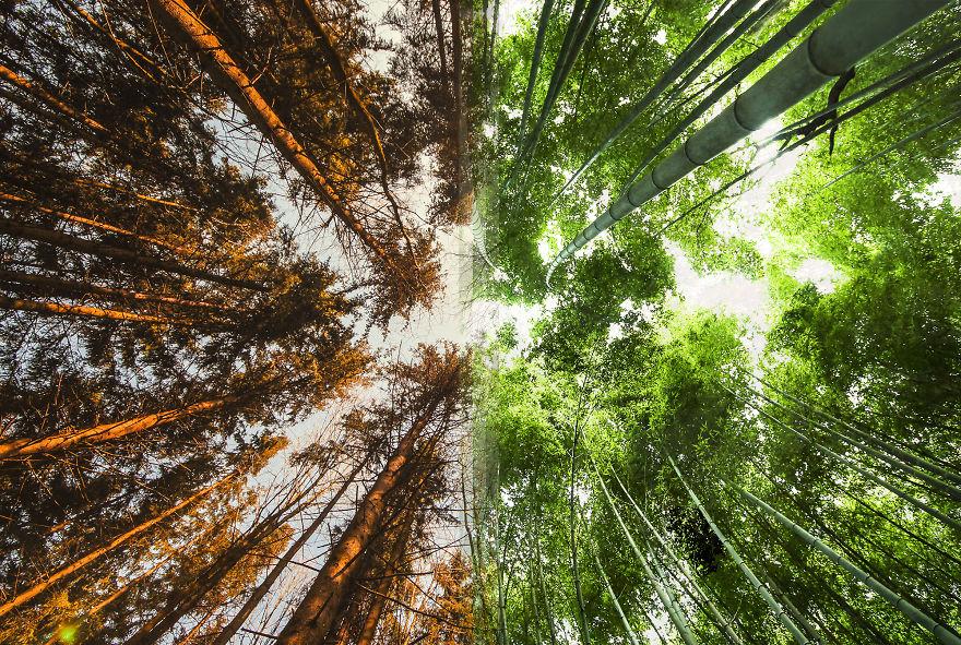 1 – Floresta na Noruega Vs floresta no Japão