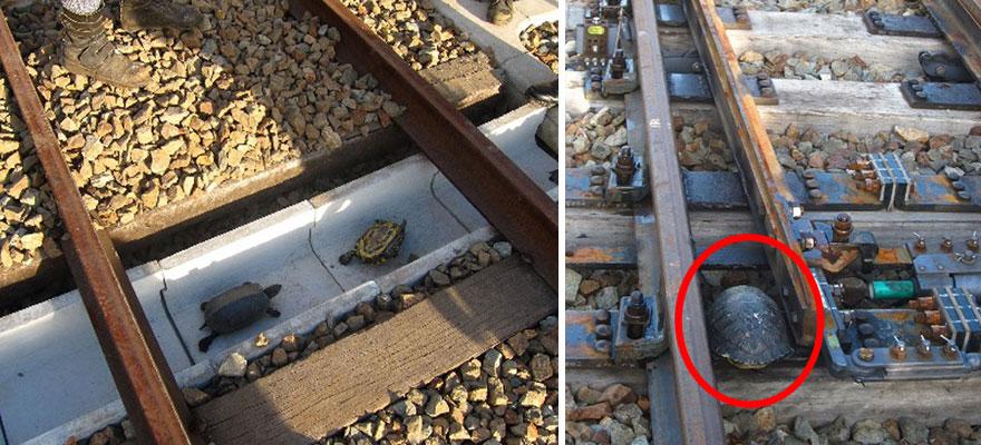 3 – Túnel de tartarugas no Japão