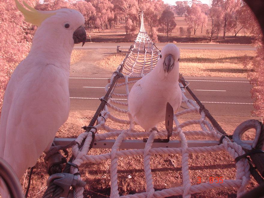 7 – Ponte de corda numa autoestrada em Victoria, na Austrália