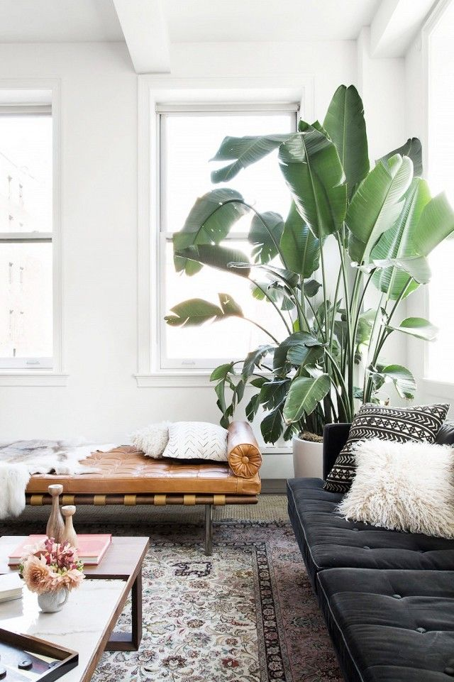 Incorpora mais plantas / Claire Esparros for Homepolish
