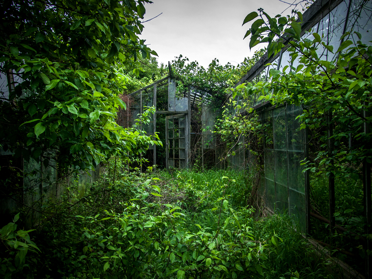 ... e a vegetação consome os espaços
