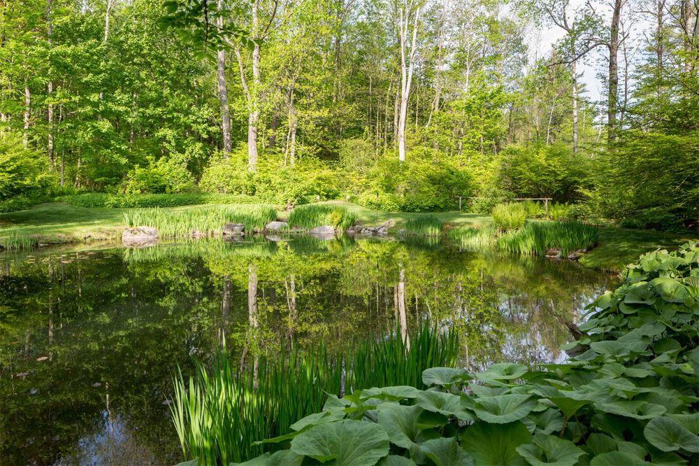 Um lago com nenúfares