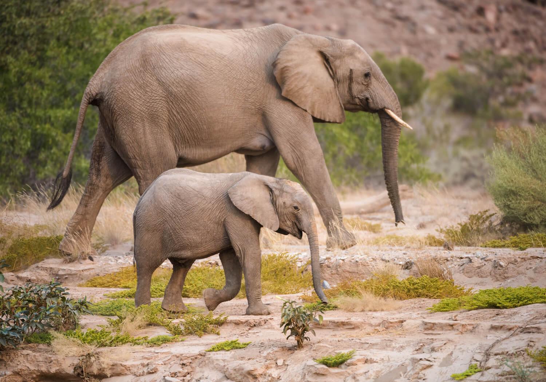 ... onde poderão ver elefantes, leões e rinocerontes
