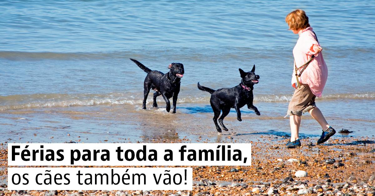 Praias para cães