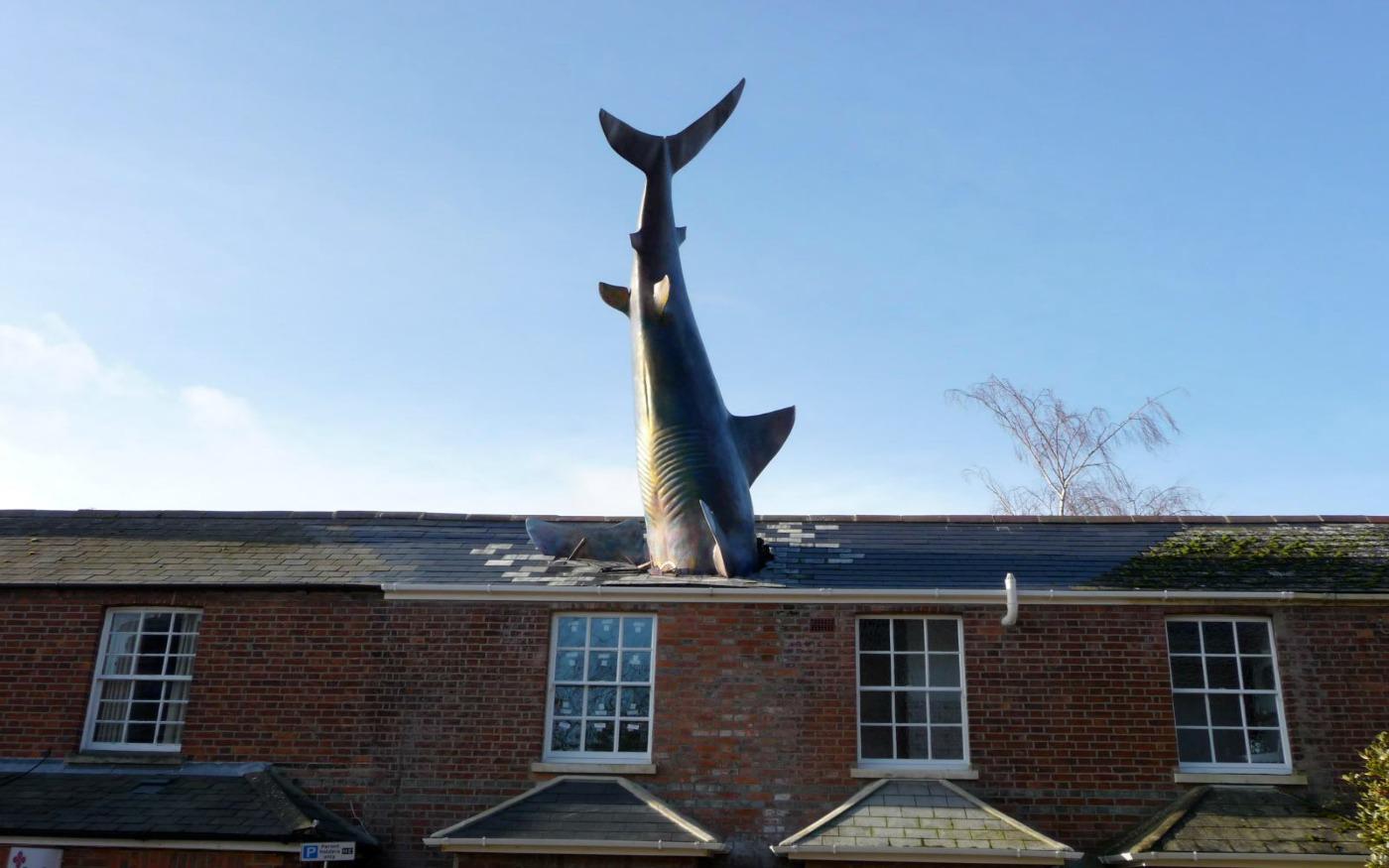 Tubarão de Headington
