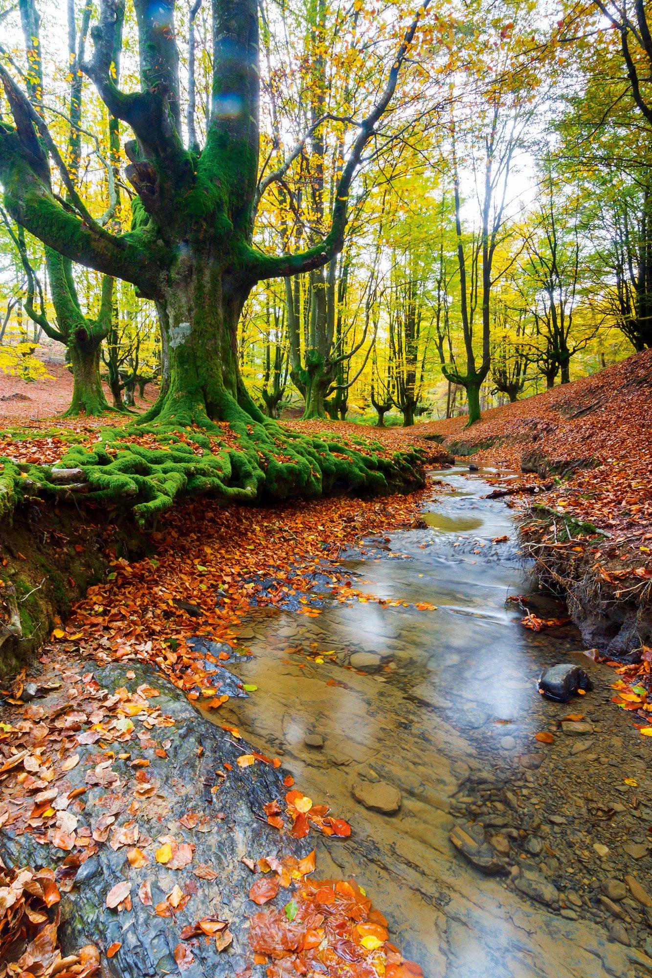 Parque Natural de Gorbea, País Basco, Espanha / National Geographic