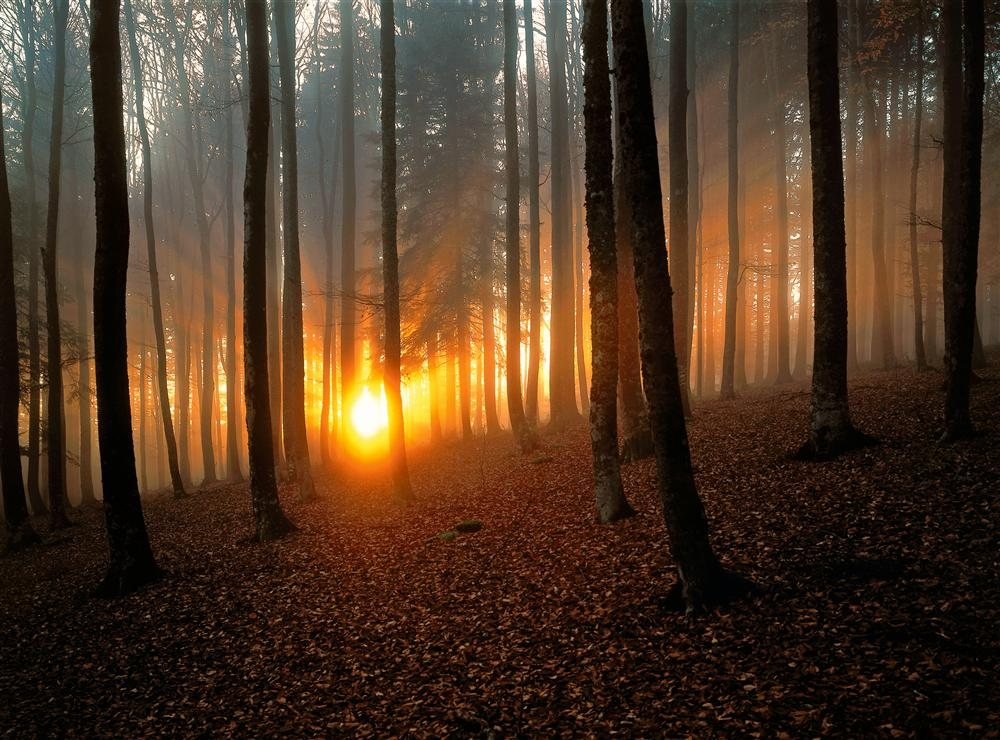 Selva Negra, Alemanha / National Geographic