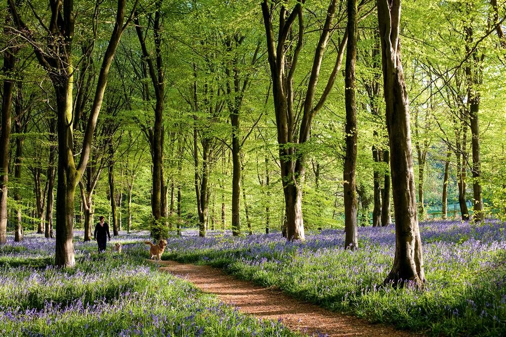 Savernake Forest, Inglaterra / National Geographic