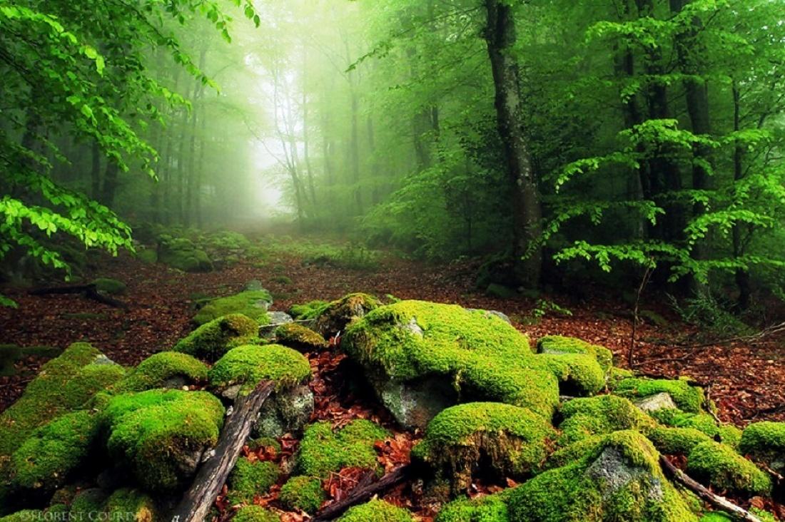 Floresta de jade, Nova Zelândia / National Geographic