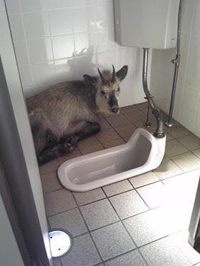 Casa de banho partilhada?