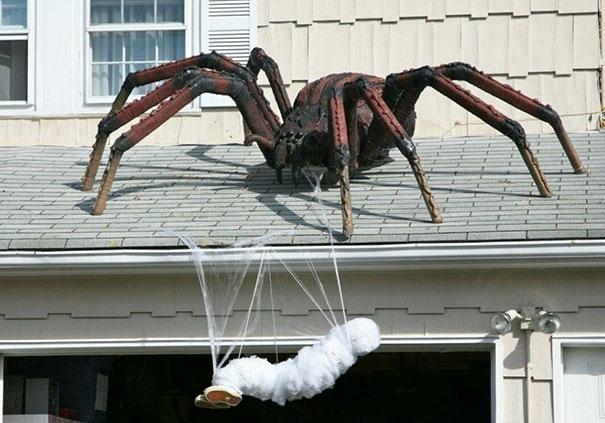 Aranha em cima do telhado