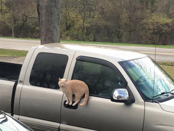 Um gato 'equilibrista'
