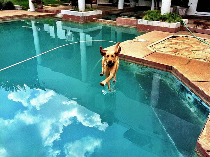 Um 'cão voador'