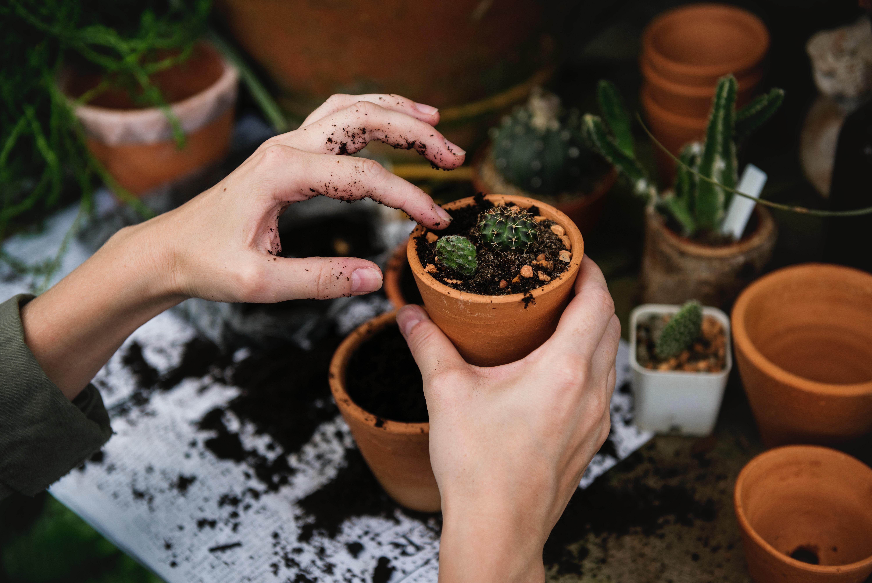Ter plantas dentro de casa pode ser uma verdadeira terapia / rawpixel/Unsplash