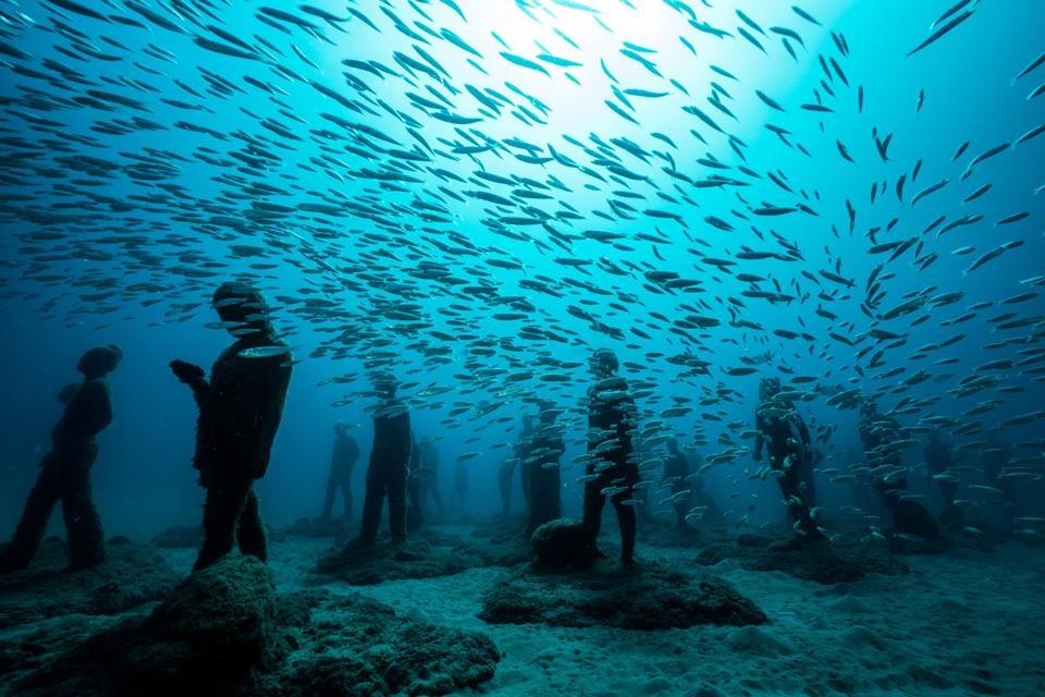 A vida marinha convive com a arte