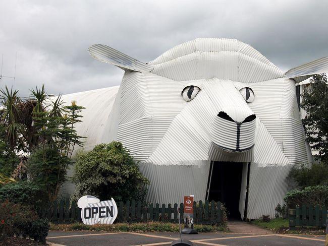 A ovelha é um símbolo do país