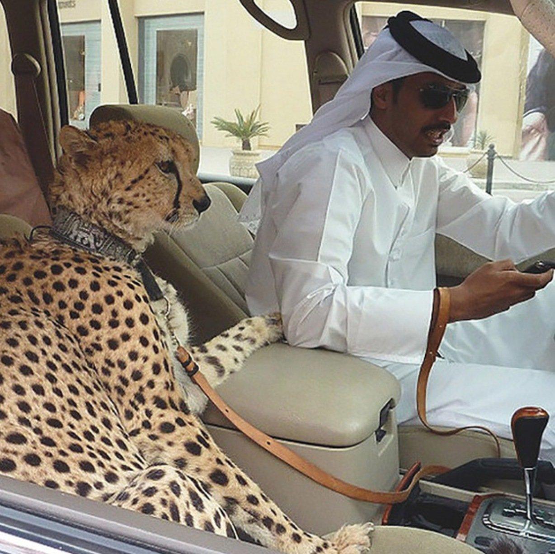 Sim, um leopardo...