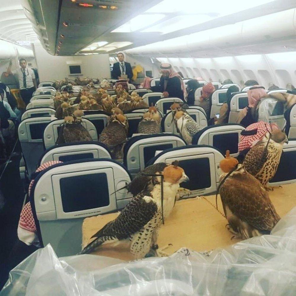 Um avião reservado para 80 falcões