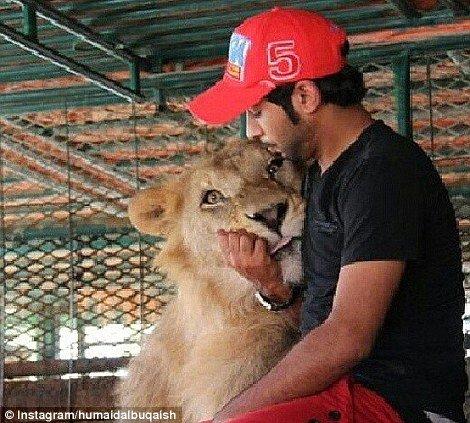 Em vez de cães, leões