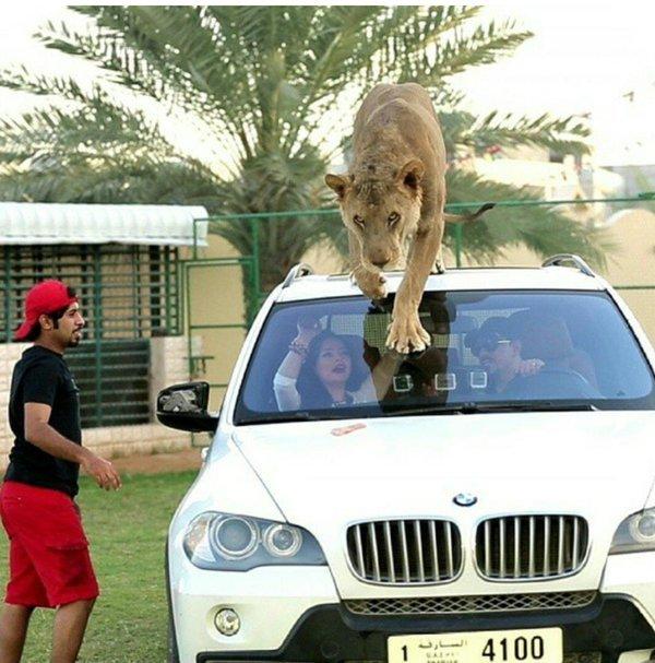 ... E mais um leão