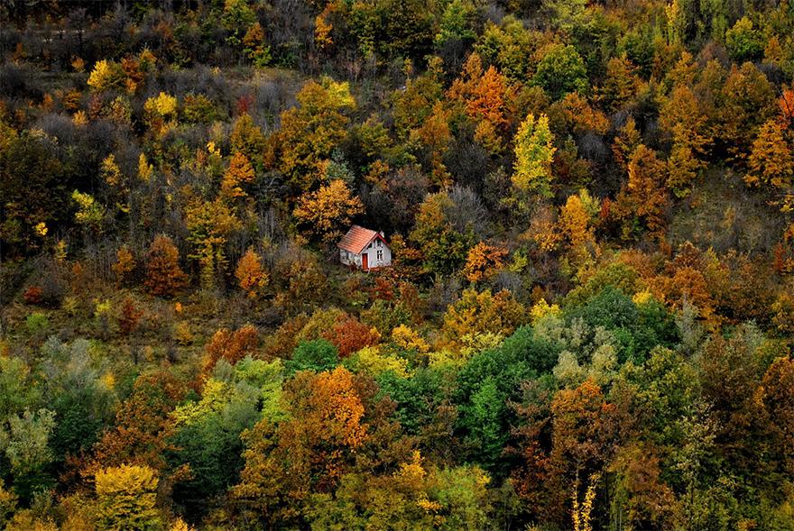 Floresta multicolorida