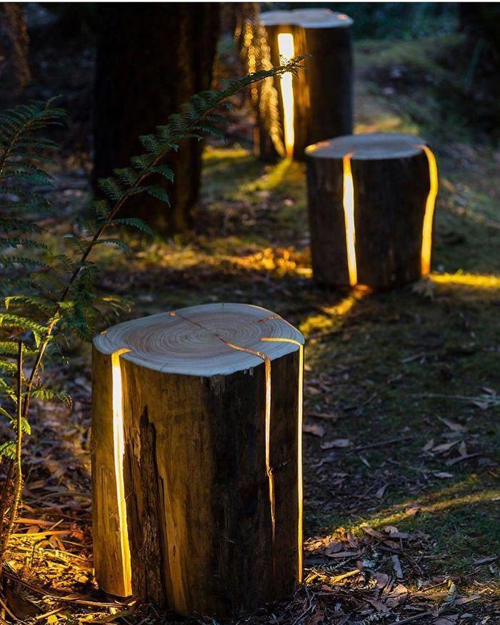 Dar luz às árvores