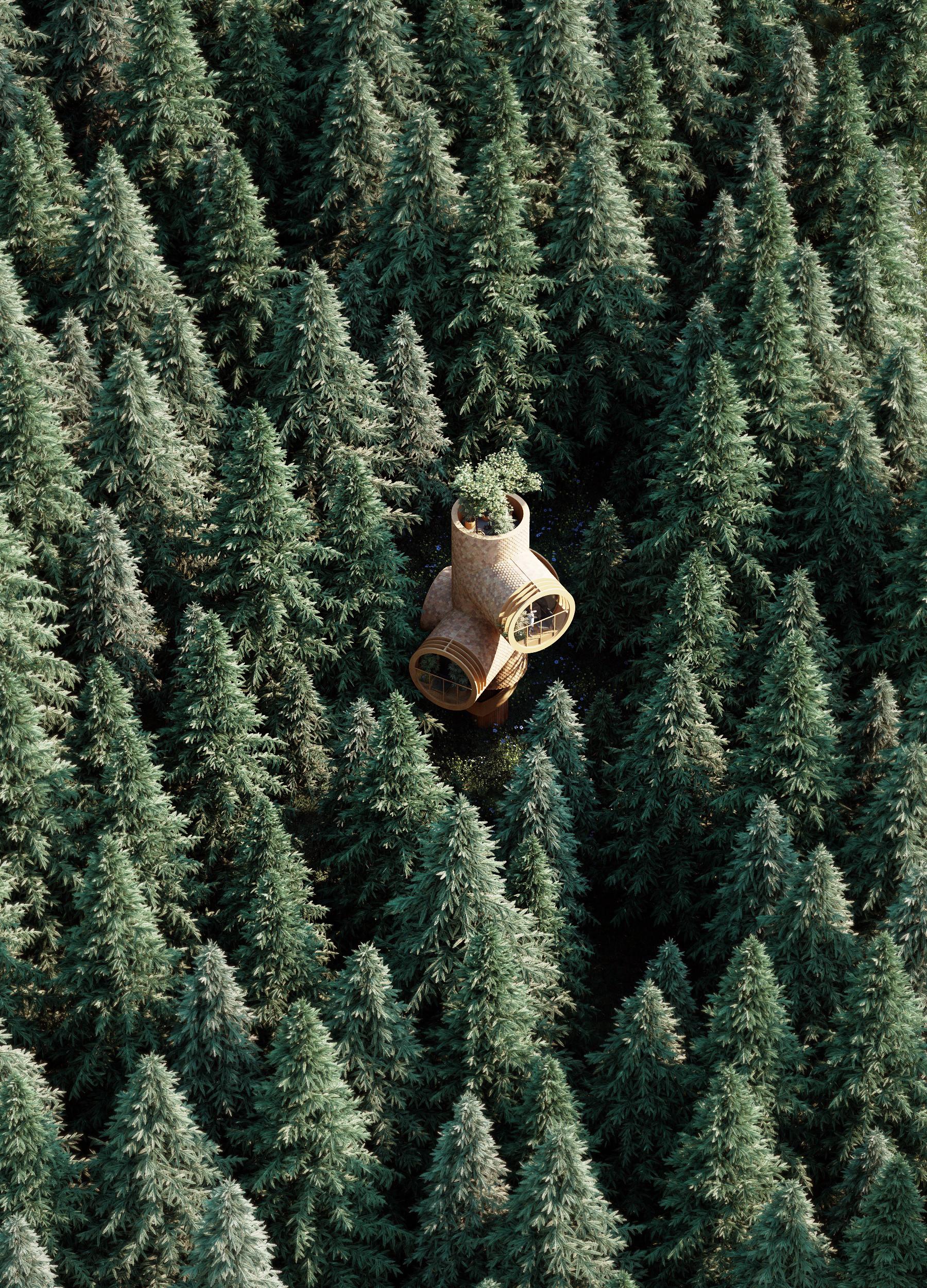 Uma casa 'mergulhada' num mar de árvores