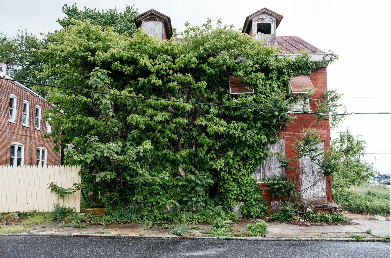 Uma casa engolida pela natureza