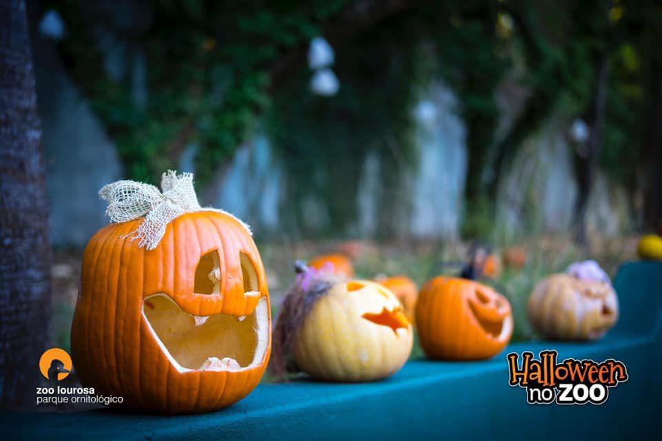 Halloween do Zoo de Lourosa