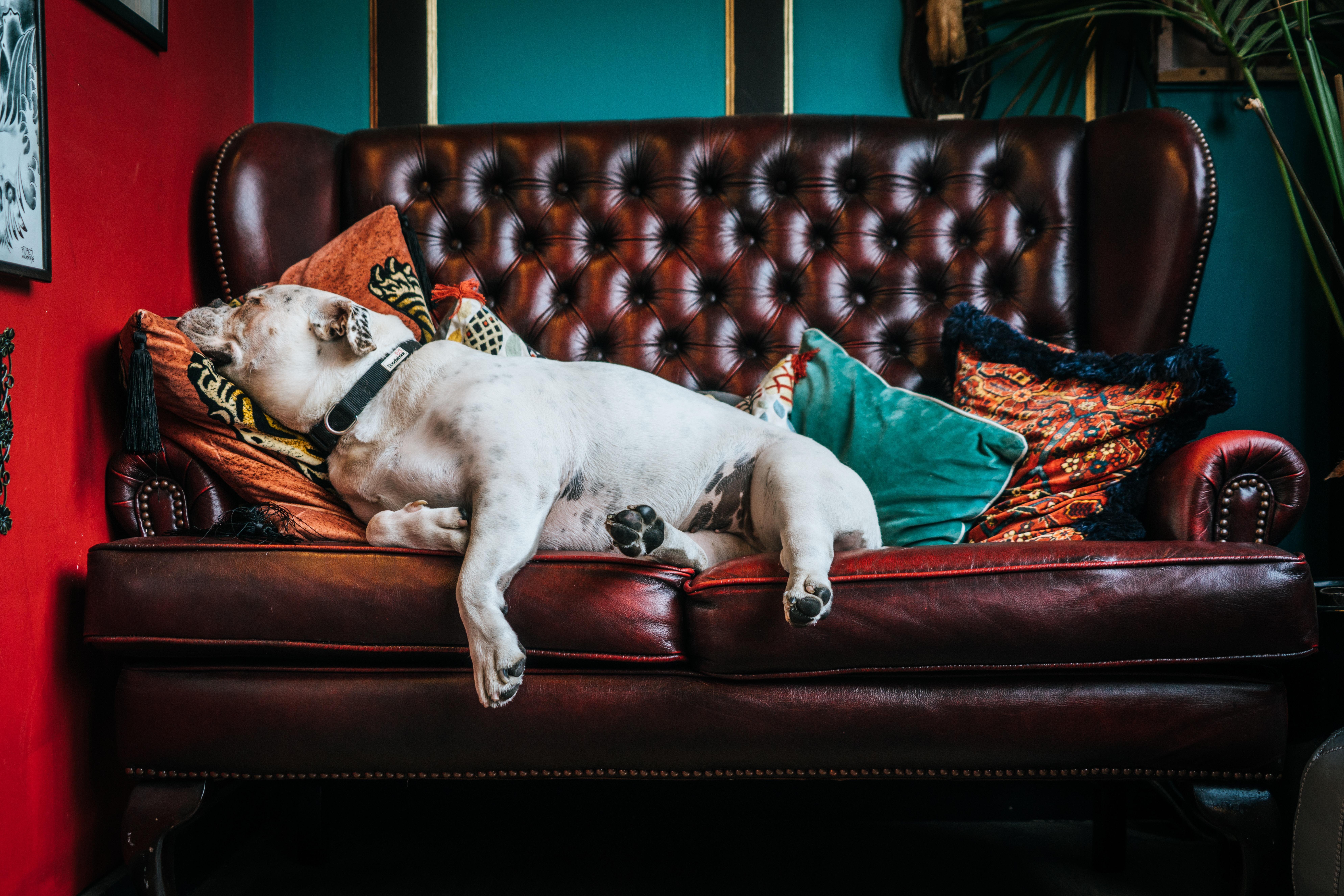Escolher bem o tecidos dos sofás