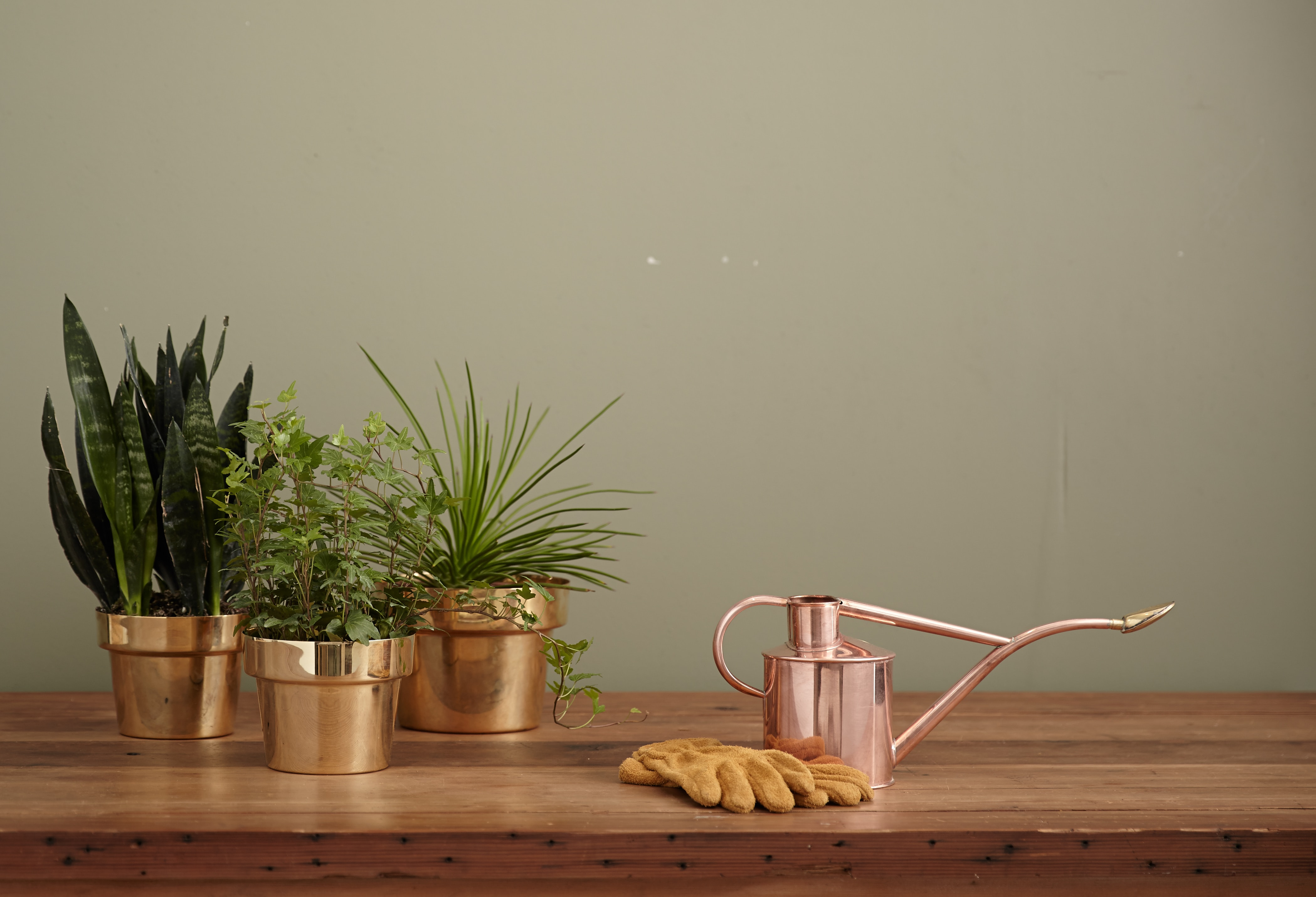 Para os amantes de plantas