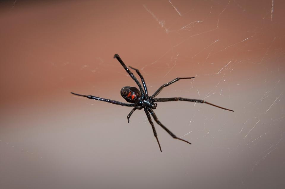 Viagem ao mundo das Aranhas