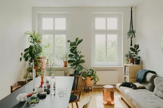 As plantas dão vida à casa