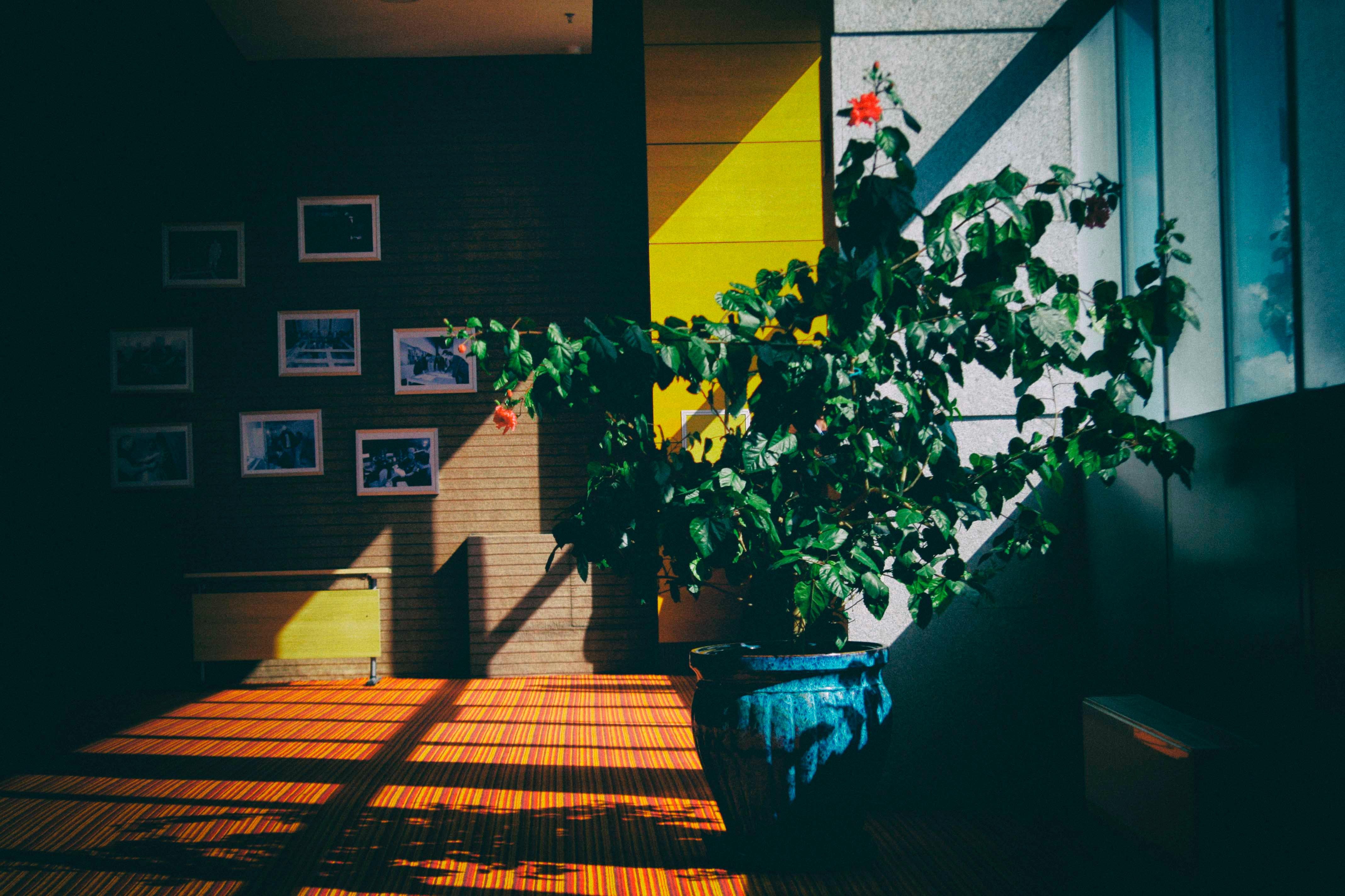 A luz é outro fator fundamental, mas são precisos cuidados / Photo by Sanetwo Sodbayar on Unsplash