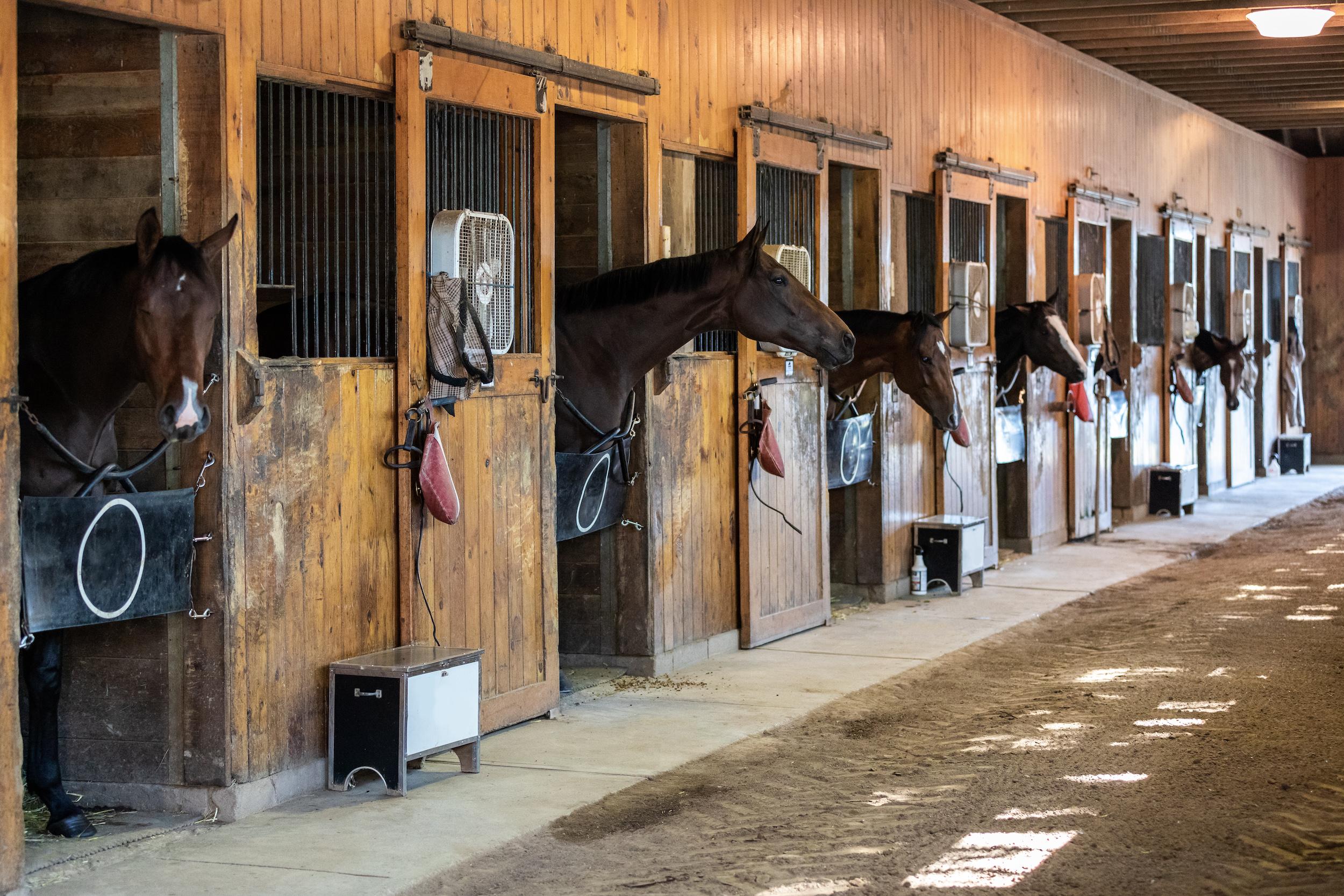 A propriedade dedica-se à criação de cavalos