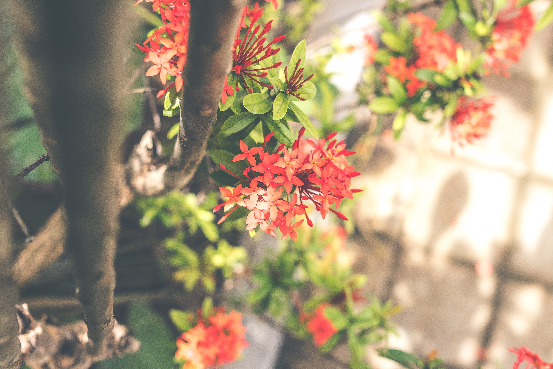 Pôr flores no jardim