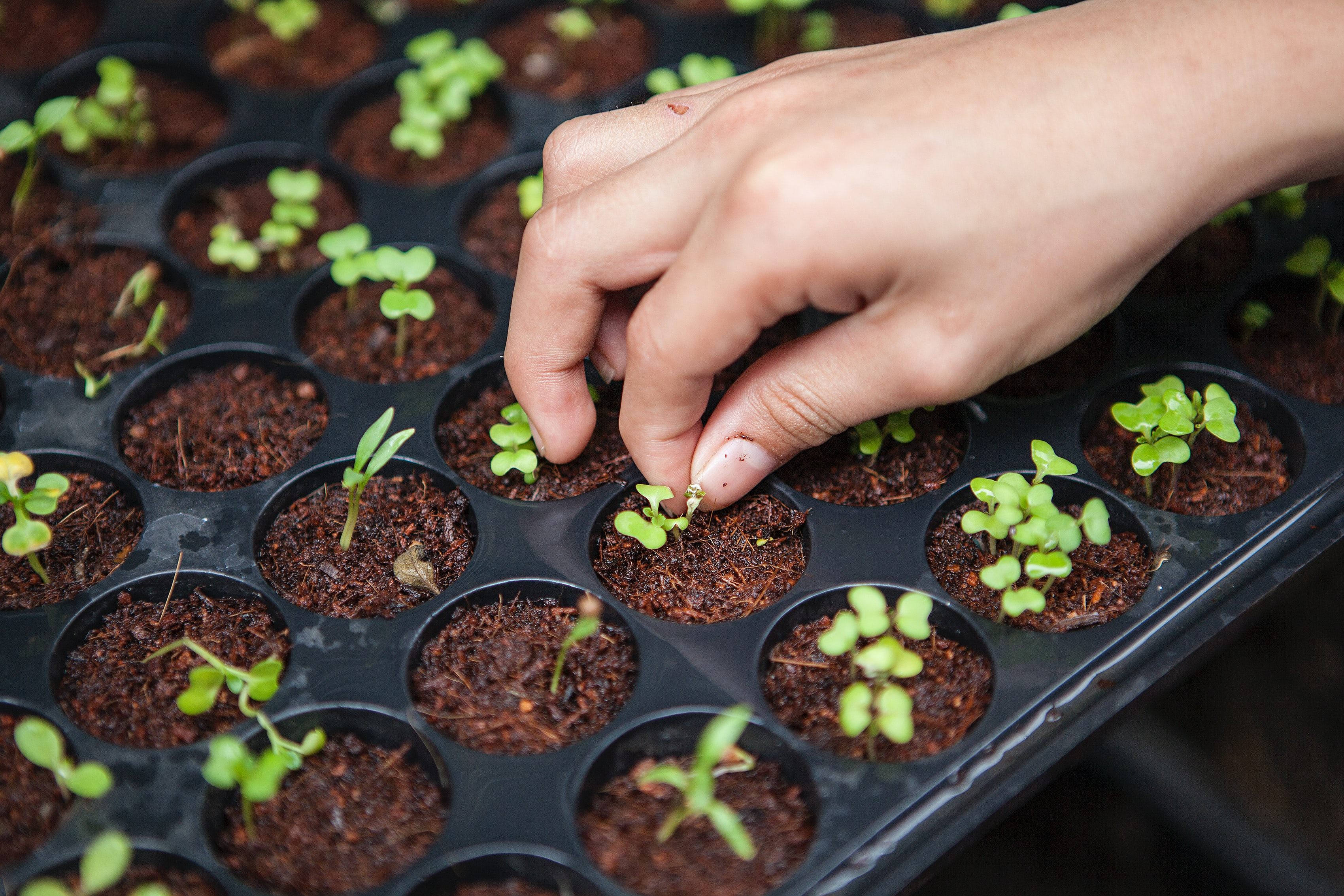 O ideal será começar com algumas ervas aromáticas, por exemplo