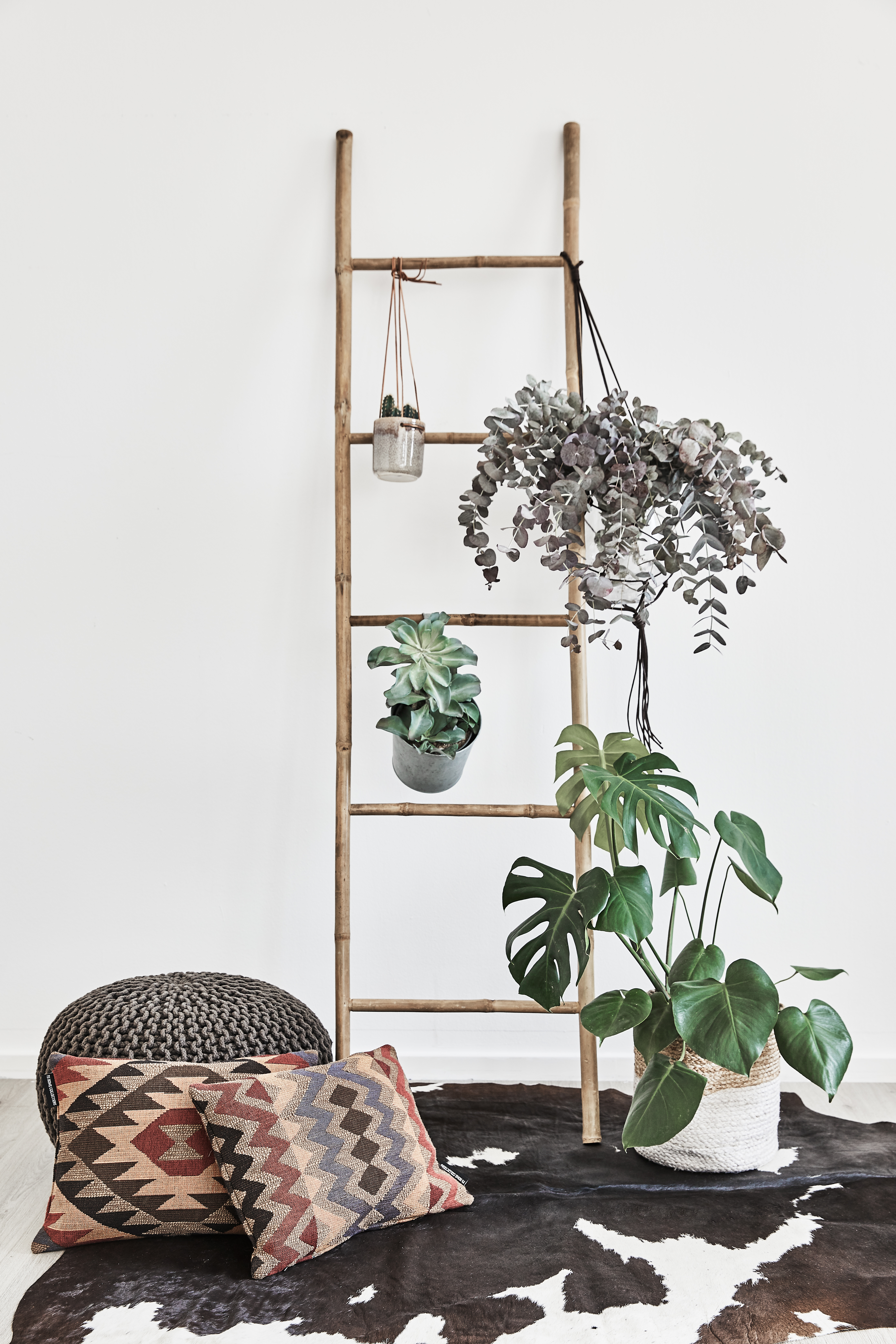 Plantas e mais plantas