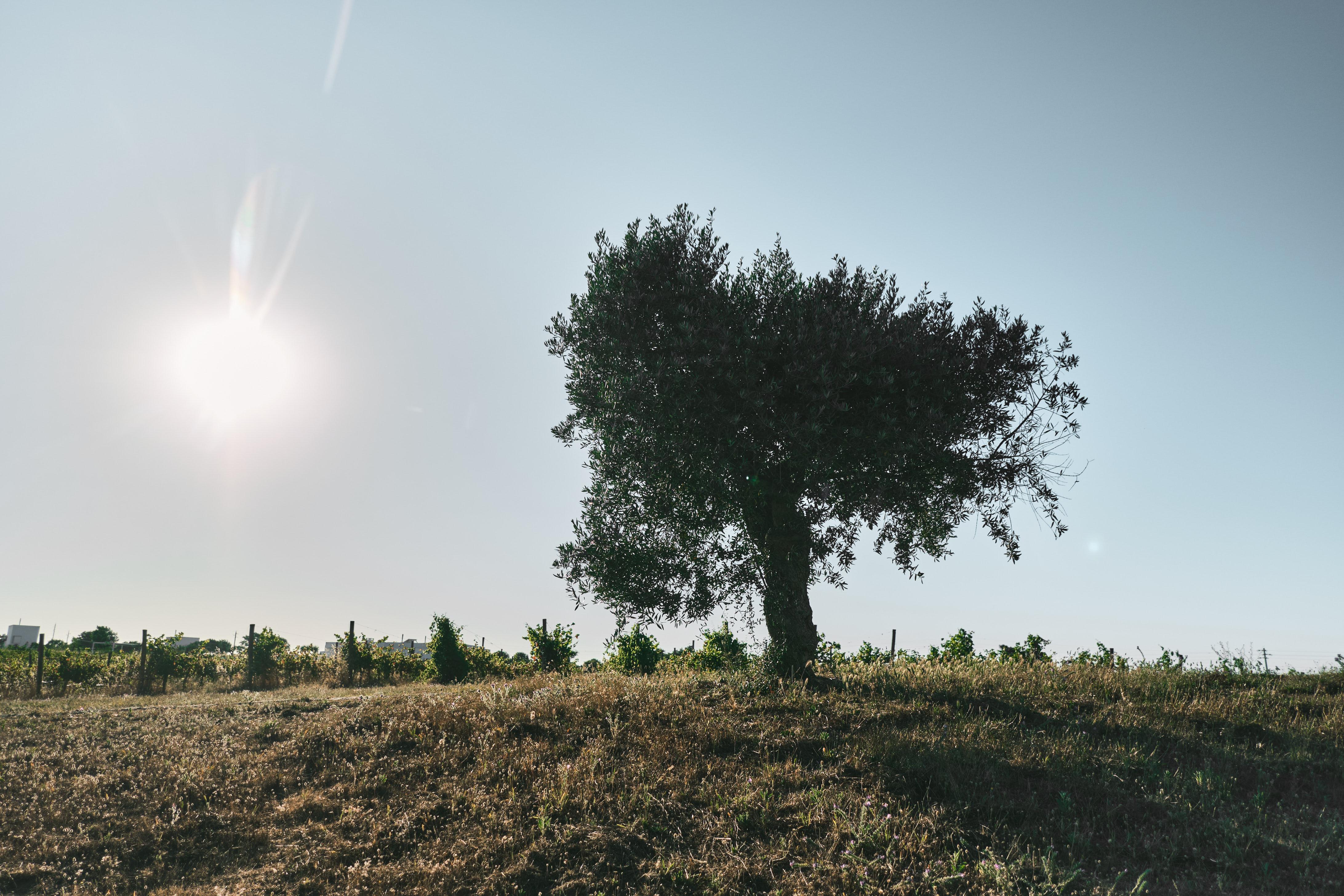 Imagem de parte das vinhas existentes na propriedade / L'AND Vineyards
