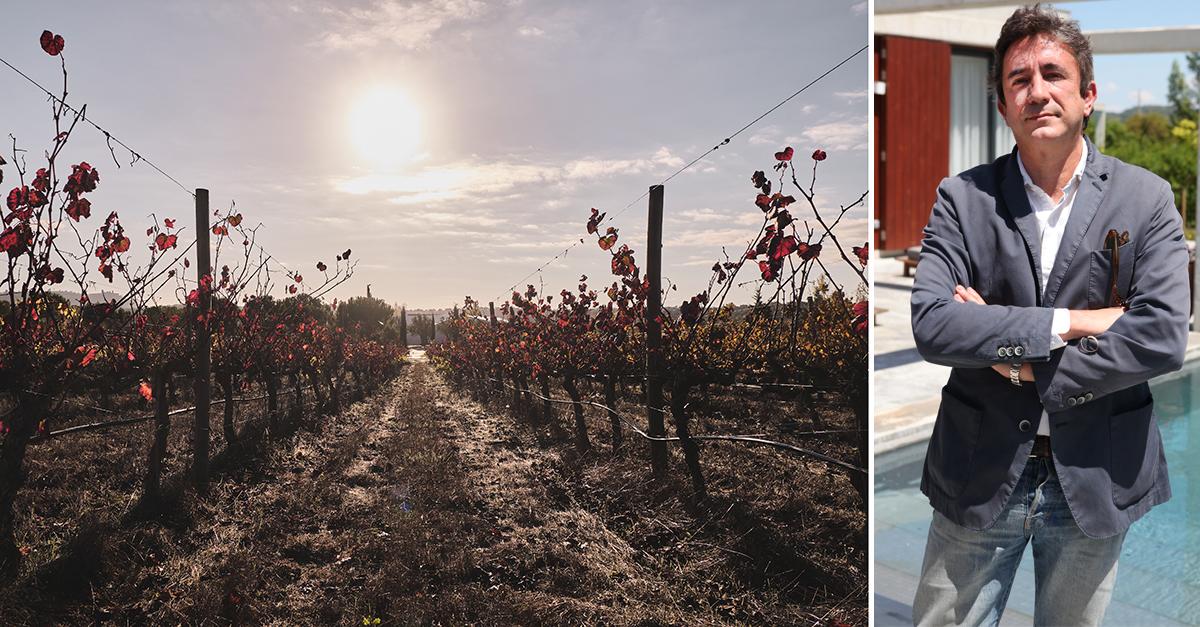 As vinhas do L'AND Vineyards e, à direita, José Cunhal Sendim / L'AND Vineyards / ilusao.otica