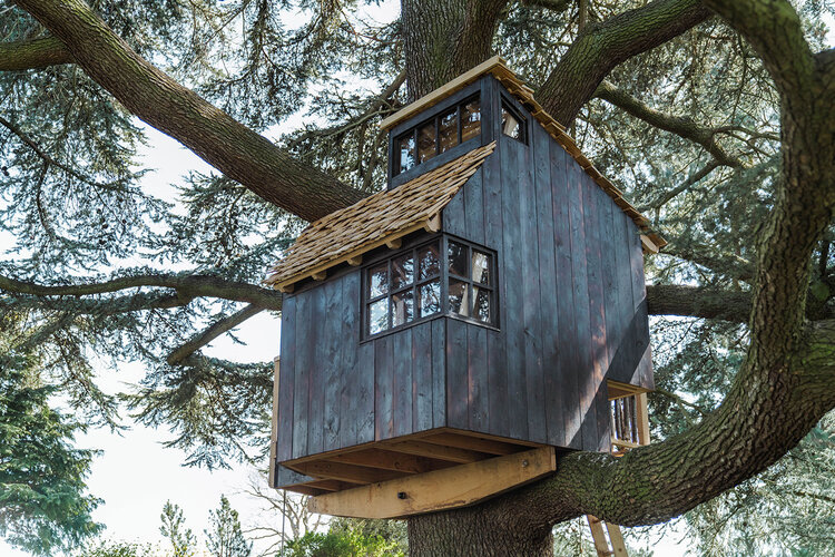 Casa na árvore desenhada por Sebastian Cox